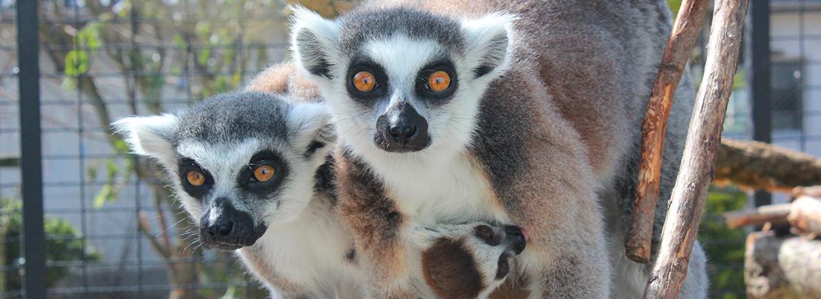 Munkebo zoo